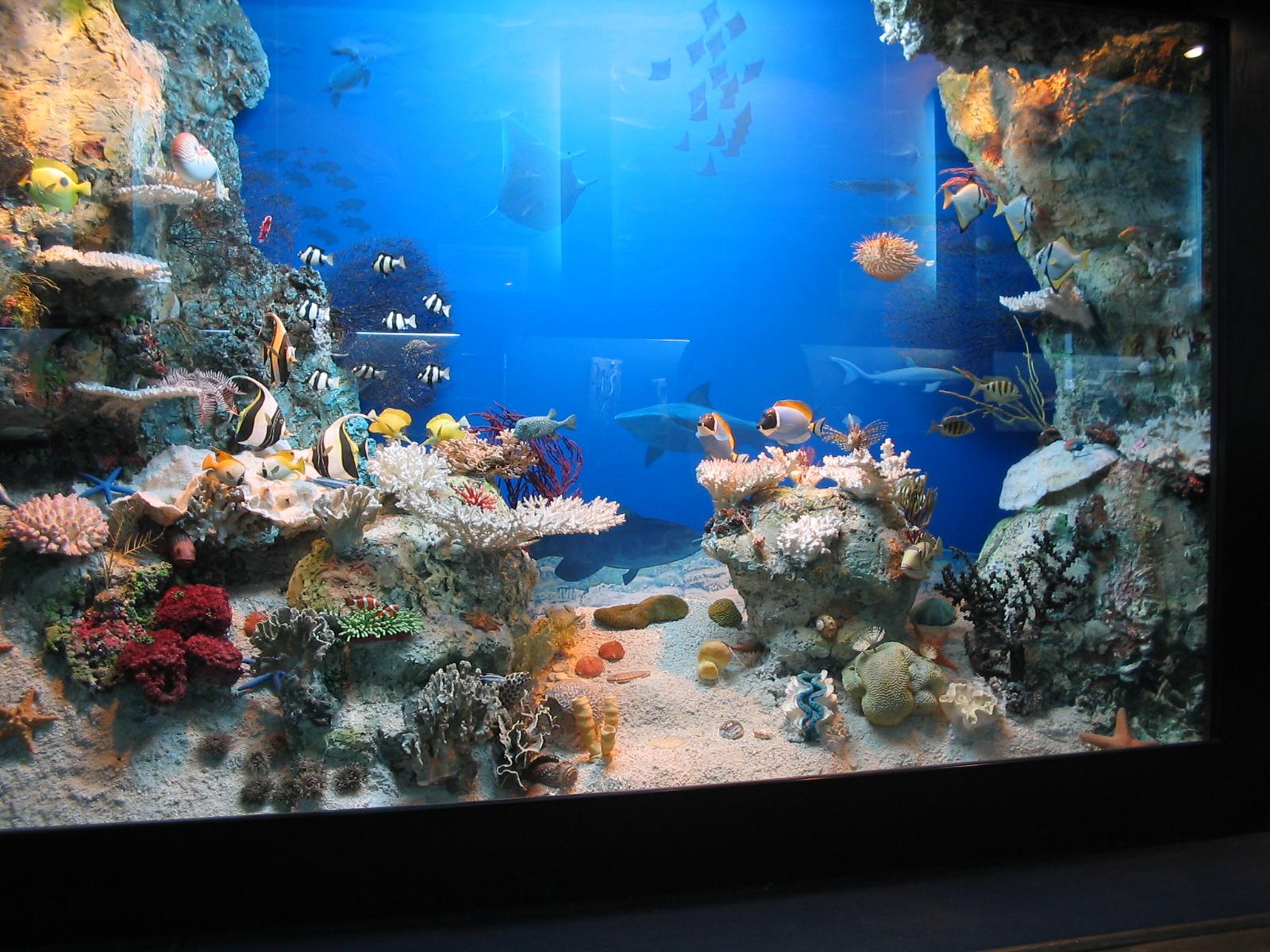 Akwarium Morskie W Gdyni Moc Atrakcji Dla Wszystkich Projekt 50 Ok